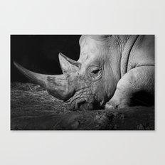 Rhino II Canvas Print