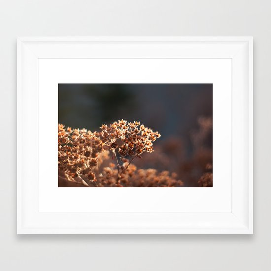 Morning's Light Framed Art Print