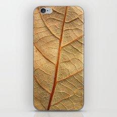 old leaf iPhone & iPod Skin