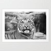 Tiger#5 Art Print
