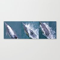 Dolphin Collage Canvas Print