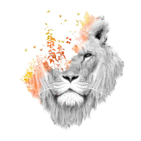 If I roar (The King Lion) Canvas Print
