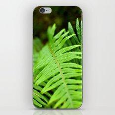 Green fern iPhone & iPod Skin