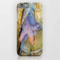 iPhone & iPod Case featuring Tidepool Starfish by Heidi Fairwood