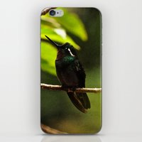 Hummingbird On A Branch iPhone & iPod Skin