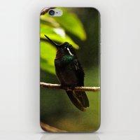 Hummingbird on a branch iPhone & iPod Skin