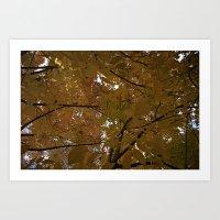 Sunlit Autumn Tree Leave… Art Print
