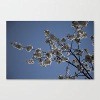 Cherry Blossom Canvas Print