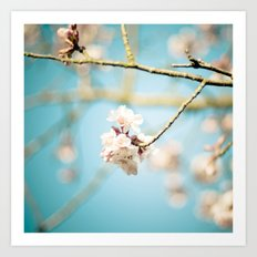 Cherry Blossom, Pink Flowers and Blue Sky. Art Print