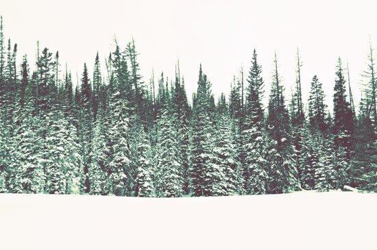 Snow on the Pines Art Print