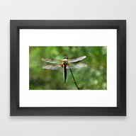 Framed Art Print featuring MM - Dragonfly With Boke… by Pirmin Nohr