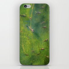 Bluegill iPhone & iPod Skin