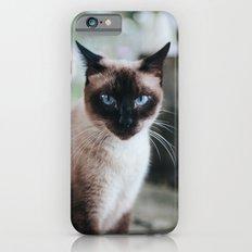 Blue-eyed Cat iPhone 6 Slim Case