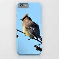 Waxwing on a Winter's Day iPhone 6 Slim Case