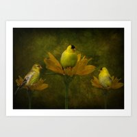 A Family of Goldfinch Art Print