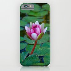 Water Lily 1 iPhone 6 Slim Case