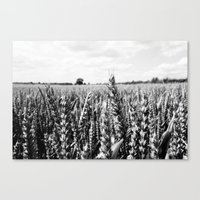 Summer Fields #5 Canvas Print