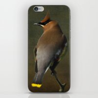 Cedar Waxwing iPhone & iPod Skin
