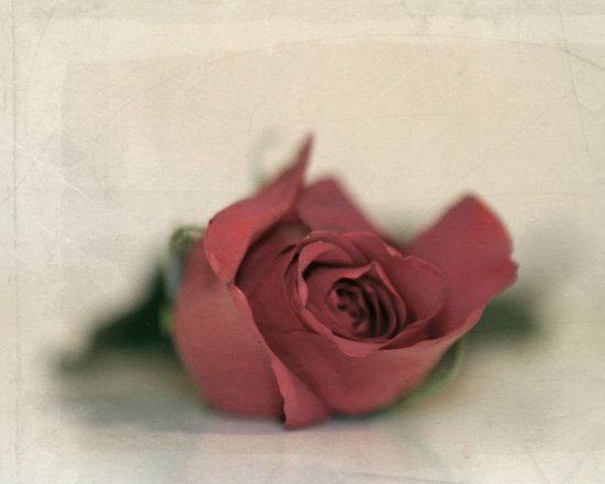Single Rose fine art photography Art Print
