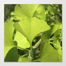 green ginkgo leaf VII Canvas Print