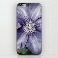 Clematis iPhone & iPod Skin