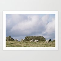 Sheep beside a drystone wall at sunset. Derbyshire, UK. Art Print