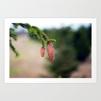 Baby Pine Cones Art Print