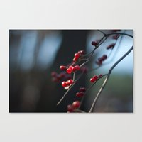 Winter Berries II Canvas Print