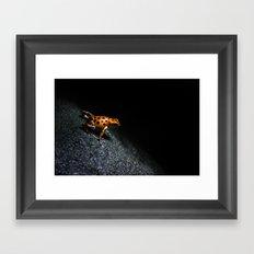 Poison Dart Frog Framed Art Print