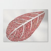 50 Shades of Red Canvas Print