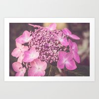 Botanical Pink Rose Purple Lace Cap Hydrangea Flower Art Print