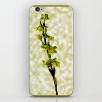 Winter Jasmine  iPhone & iPod Skin