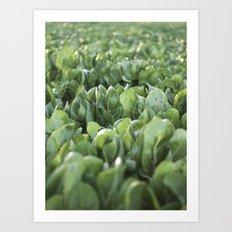 Green Textures - Food - Vegetables Art Print