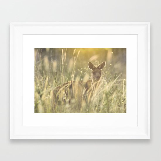 Sneaky Kangaroo in the Evening Sunset Framed Art Print