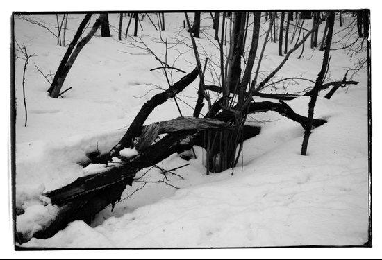 Norwegian forest V Art Print