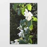 Spring Glow Canvas Print