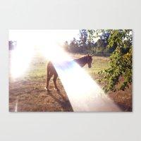 summer horse Canvas Print