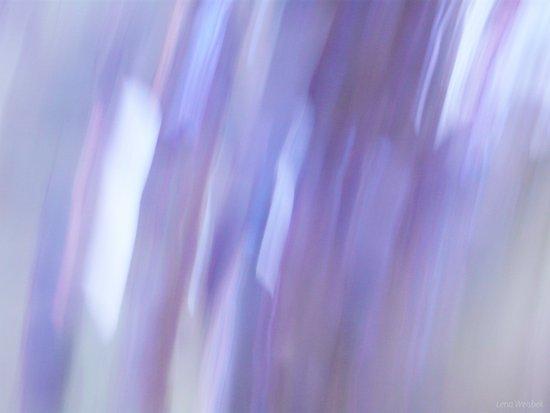 Lavender Dream Art Print