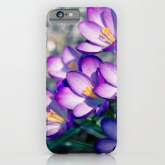 Crocus is the present of spring Slim Case iPhone 6s