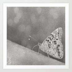 Paused (Butterfly, Black & White) Art Print