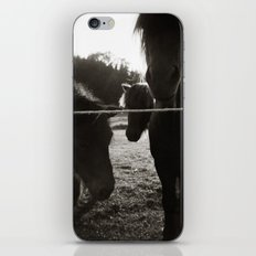{ pony pals } iPhone & iPod Skin