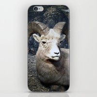 Tom Feiler Mountain Goat iPhone & iPod Skin