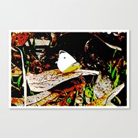 Cabbage White Butterfly … Canvas Print