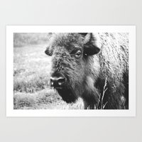 Buffalo Portrait Photograph - the Black and white series Art Print