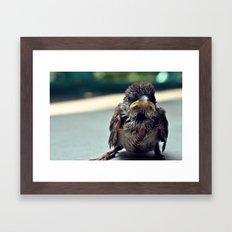 Poor Birdy Framed Art Print