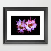 Purple cactus blossom Framed Art Print