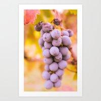 In vineyard Art Print