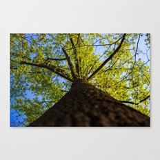 Upward to the canopy Canvas Print