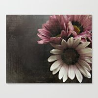 gazania flowers Canvas Print