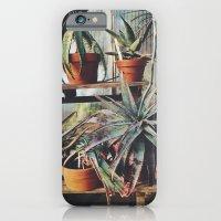 Cactus Wall iPhone 6 Slim Case